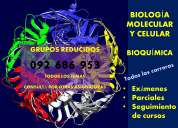 Bioquímica, clases particulares 099 259 626