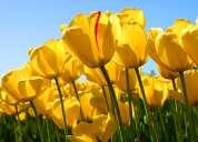 Podas y talas de arboles  limpieza de terrenos y jardineria