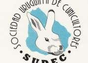 curso cunicultura - cría de conejos - sudec - sociedad uruguaya de cunicultores