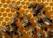 Curso de apicultura anual 098765842 excelentes resultados
