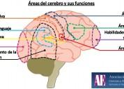 Comienzo apoyo a preparaciÓn de neuropsicologÍa y neurobiologÍa