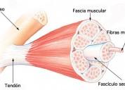 Inicio preparacion ingreso en fisioterapia, imagenologia, registros medicos de tecnologia medica
