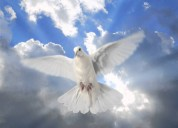 Tarotista vidente 1 preg gratis responde abal ministerial
