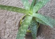 Plantas medicinales infusiones recetas exelente ef