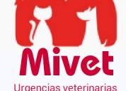 Urgencias veterinarias mivet
