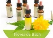 Florales bach curso de terapeuta floral intensivo