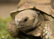 Busco tortuga de tierra
