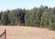 Vendo monte eucaliptus