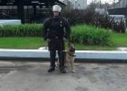 Alquiler y venta de perros para seguridad